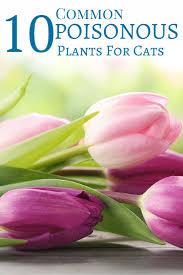 39 best poisonous plants for pets images on pinterest poisonous