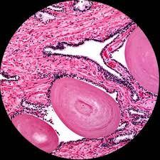 compound light microscope facts amazon com amscope m500 monocular compound microscope wf10x