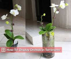 Orchid Plant How To Plant Orchids In Glass Terrarium Vases Popsugar Home