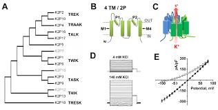 Rational K Hen Two P Domain Potassium Channels Introduction Bps Iuphar Guide