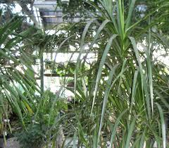 indoor plants dry jungle