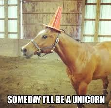 Unicorn Meme - unicorn meme tumblr