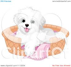 bichon frise cute clipart cute bichon frise maltese puppy dog in a basket bed