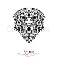 pekingese black and white graphic drawing of a dog head vector