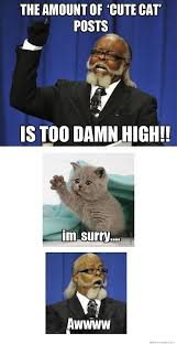 Too Damn High Meme - the amount of cute cat posts is too damn high weknowmemes
