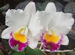 Hawaiian Flowers And Plants - hawaiian flowers orchid flower photos pinterest hawaiian