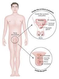 men s men s health symptoms causes diagnosis men s health treatment
