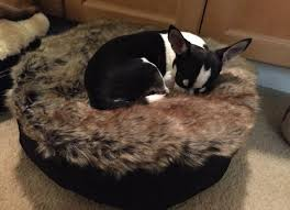 Medium Sized Dog Beds The Best Dog Beds In Faux Fur And Cozy Fabrics