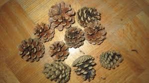 me loves pine cone christmas tree decoration preparation
