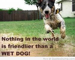 australian shepherd quotes 28 funny dog quotes spartadog blog