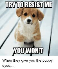 Puppy Eyes Meme - trytoresistme you wont when they give you the puppy eyes meme on