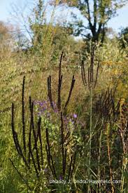 85 Best Native Plants Deep Rooted Wonders Images On Pinterest