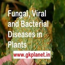 Bacterial Diseases Of Plants - list of diseases in crops or plants caused by fungi bacteria