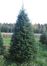 balsam tree mailhot and plantations christmas tree grower