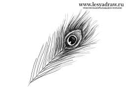 how to draw a feather of a peacock with a pencil step by step