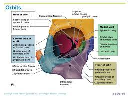 Human Anatomy And Physiology Marieb 7th Edition Copyright 2006 Pearson Education Inc Publishing As Benjamin