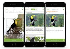 merlin bird id free bird id app is now available for southern