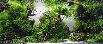 the amazing world of aquascaping emerald u0027s marvelous cabinet of