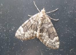 martin u0027s moths november 2012