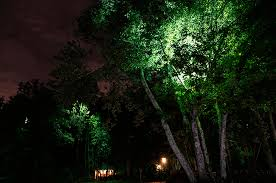 Landscape Lighting Trees Home Douglas Oliver Lighting