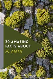 20 amazing facts about plants secrets of green