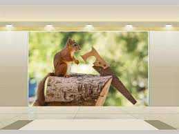 Custom Kids Room by Online Get Cheap Squirrel Wallpaper Aliexpress Com Alibaba Group