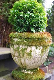 Moss Vase Filler Moss Covered Garden Urn With Boxwood Moss Covered
