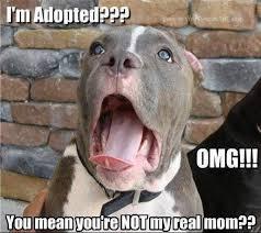 Dog Jokes Meme - im adopted dog meme