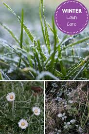 21 best garden edging ideas images on pinterest garden edging