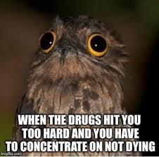 Potoo Bird Meme - drugs are bad mkay http ibeebz com humor pinterest laughter