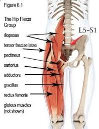 Foot Tendons Anatomy Ligaments Of The Foot Muscles Tendons U0026 Ligaments Of The Foot