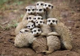 Group Hug Meme - open thread group hug we hunted the mammoth