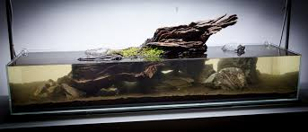 aquascape tutorial video simplicity by james findley the green