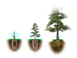bio urn 32 best living urn images on memory tree tree