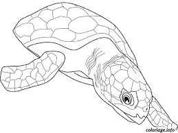 coloriage animaux dessin à imprimer gratuit
