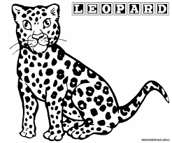 coloring printable snow leopard pages template cheetah coloring