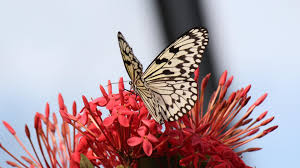 butterfly on red flowers hd wallpapers wallpapers new hd wallpapers