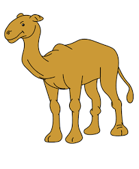 baby camel coloring pages for kids to color and print