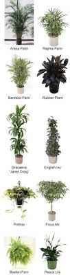 best house plants 10 best clean air house plants