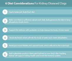 natural options for kidney disease u0026 failure