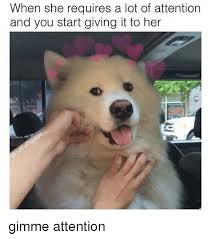 Attention Meme - when she requires a lot of attention and you start giving it to her