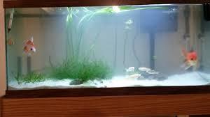 aquarium decoration ideas freshwater aquarium decoration ideas my aquarium club