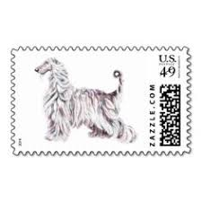 us afghan hound delightful shot with afghan hound five year plan pinterest