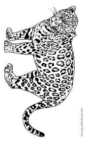 coloring pages of tigers happy little zebra animal coloring page zebra coloring page