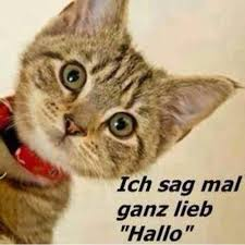 Hallo 14 Hallo Images Funny Sayings True Words