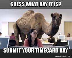 Timecard Meme - guess what day it is submit your timecard day hump day camel