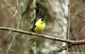 april 2014 365 days of birds