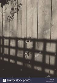 Trellis On A Shadow Of A Garden Trellis On A Wooden Fence Stock Photo