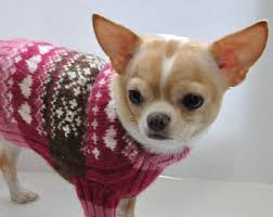 chihuahua sweater brown sweater clothing chihuahua