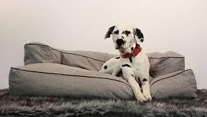 nettoyer pipi de chien sur canapé nettoyer pipi de chien sur canap 53 images recettes astuces et